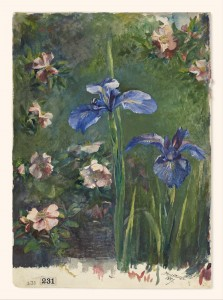 Wild Roses and Irises John La Farge